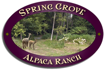 Spring Grove Alpaca Ranch
