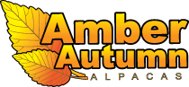 Amber Autumn Alpacas